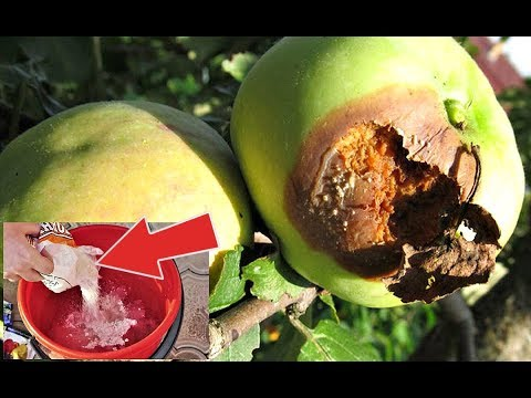 Опрыскайте этим яблони