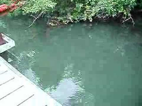 North augusta fishing pier and boat dock 2 2 youtube for Fishing in augusta ga