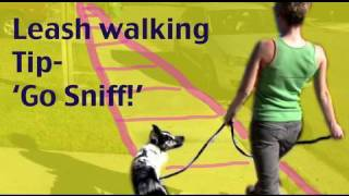 Leash Walking Tip: Teach 'go Sniff'  - Dog Training Tutorial