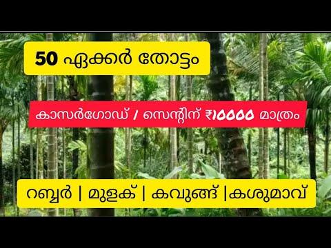 50 Acre Rubber   Pepper   Arecanut   Cashew   Estate for Sale   Kasargode   Kerala (സെന്റിന് 10000)