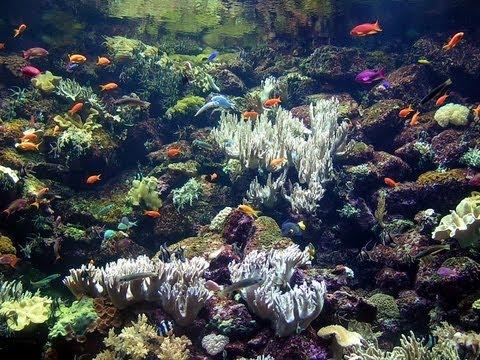 Как растут кораллы