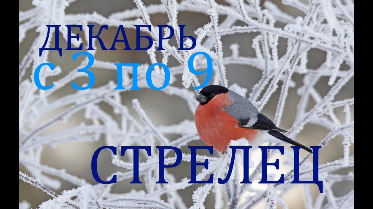 СТРЕЛЕЦ. ТАРО -ПРОГНОЗ на НЕДЕЛЮ с 3 по 9 ДЕКАБРЯ 2018г.