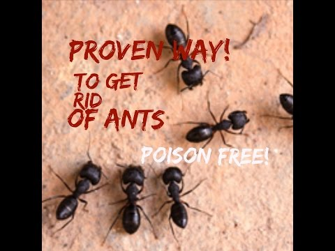 How to get rid of ants in the laundry room