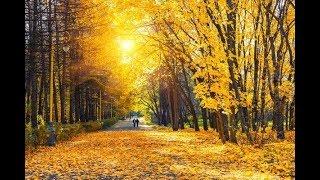 Equinoxe d'automne le secret de la décoloration des feuilles-10mots pour comprendre