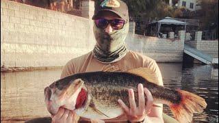 Huge Bass Caught Float Tubing Canyon Lake!