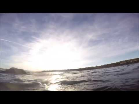 Swimming with wild dolphins, Adelaide
