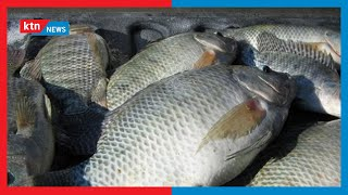 County roots for study on fishing following a recent sharp drop in fish catch in Lake Naivasha
