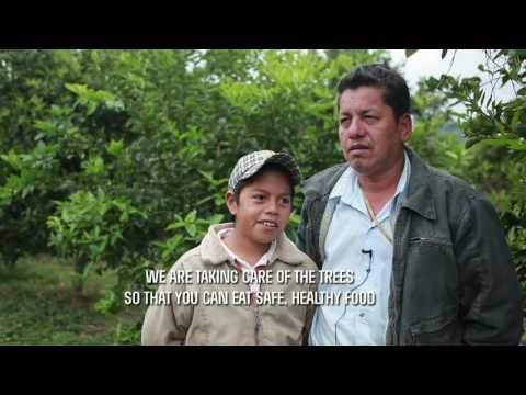 Organic Alliance - Developing Organic Agriculture w/ Indigenous Lime Producers