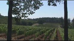 Visiting Oregon wine country... on horseback