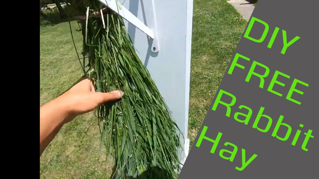 How to hand harvest and dry grass for winter rabbit feed