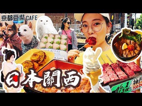 日本關西京都   錦市場吃到撐   嵐山失敗的自由行   A5牛肉是這樣的?  八坂神社   花見小路  柴犬咖啡  🦉貓頭鷹博物館萌炸了 