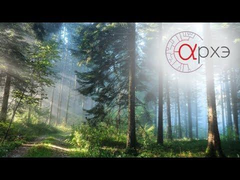 Ольга Смирнова: Ключевые виды растений