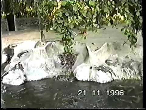 TEZAMEN NU OP VAKANTIE IN TANZANIA & KENIA 1996
