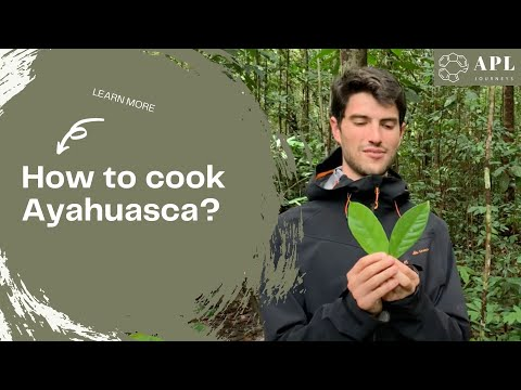 How to make Ayahuasca and harvest chakruna by APL Shamanic Journeys