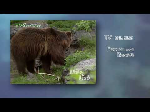 FaunaView: Yellowstone  - Grizzly Landscape