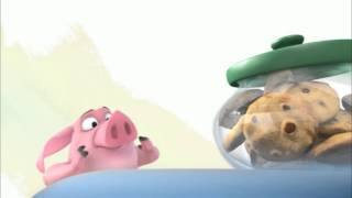Ormie Funny Pig want cookies