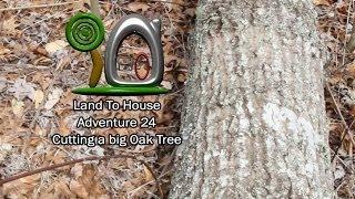 Adventure 24 - Cutting a Big Oak Tree