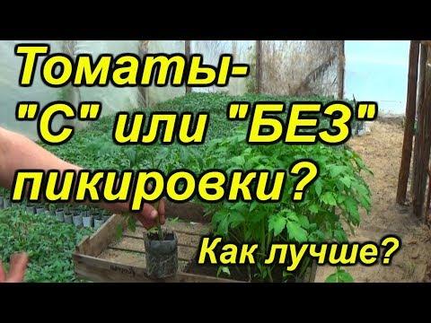 Томаты-два способа выращивания рассады-с пикировкой и без неё.