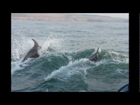 Castle Charter Stonehaven Harbour - Dolphins Playing With The Boat, Stonehaven Bay