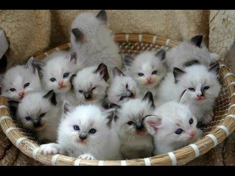 Коты и кошки: Когда у тебя много котят - YouTube