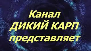 Рыбалка и отдых летом 2020г на Волге в Астраханской области