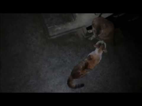 Why Cats Fight - When They Can Walk Away