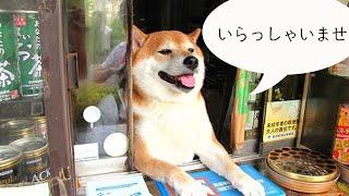 """東京都の武蔵小金井にある""""鈴木タバコ店""""には、おそらく世界一有名な看..."""