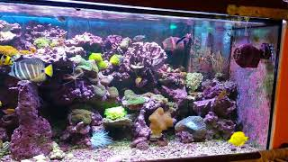 il mio acquario marino dopo 14 mesi