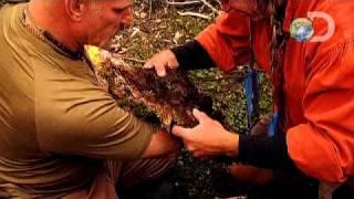Dual Survival - Cauterization YouTube Videos