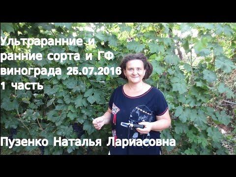 1фильм 25.07.2016 ультраранние и ранние сорта винограда на участке Пузенко Н.Л.
