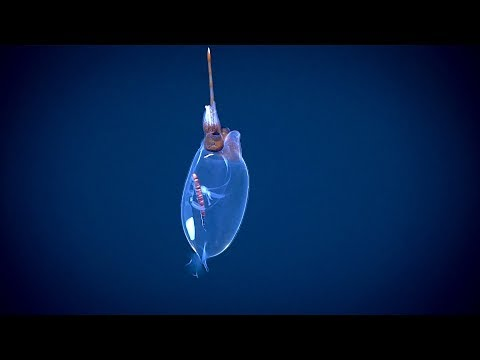 Dive 11: World Of Water: Deep-Sea Symphony