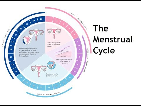 women's-health---the-menstrual-cycle
