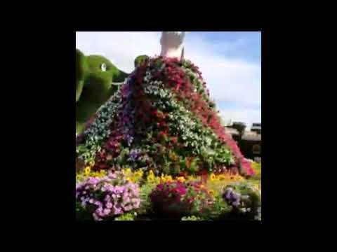 Dubai Tour – Miracle Garden 2019