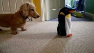 Dachshund Vs. Penguin