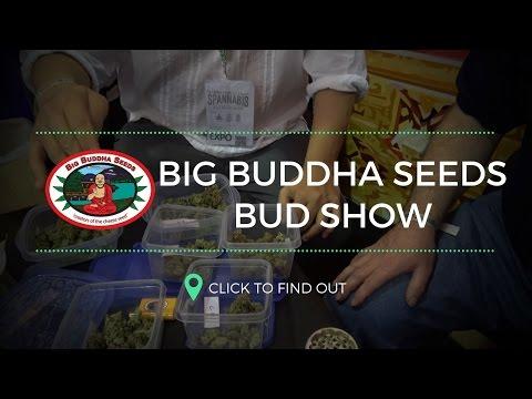 Spannabis 2017 - Big Buddha Seeds BUD SHOW!