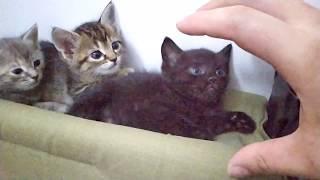 Котята говорят не трогай нас!