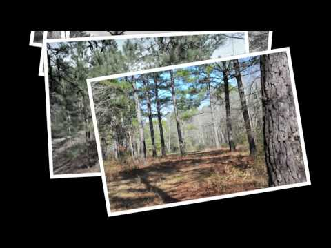 South Georgia Wooded Hunting Land Auction