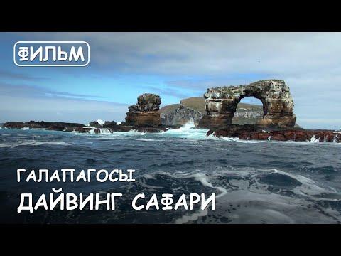 """Мир Приключений Архив фильм: """"Дайвинг сафари на Галапагосах"""". Galapagos Islands. Diving With Sharks."""
