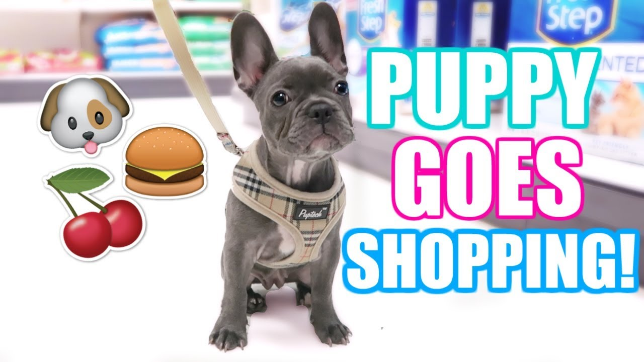 Puppy S 1st Time Shopping Buying Treats Toys Food Youtube