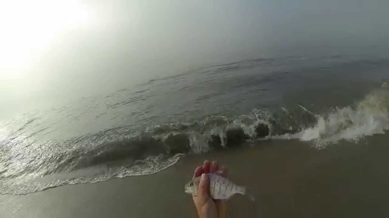 Santa cruz rivermouth surf perch fishing youtube for Santa cruz fishing report