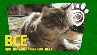 Что Мы Знаем Про Кошек (Часть Первая)?. Все О Домашних Животных
