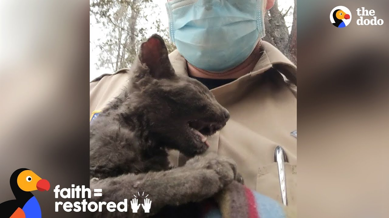 Guy Rescues Kitten From Wildfire  | Faith = Restored