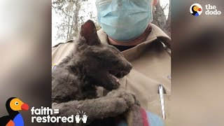 Guy Rescues Kitten From Wildfire  | The Dodo Faith = Restored