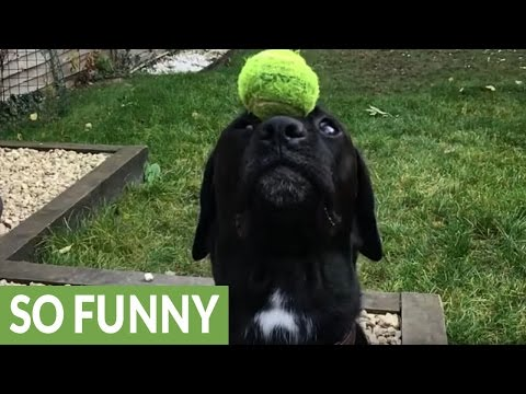 Amazing dog trick in super slow motion