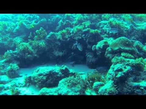 Watamula Cave Diving,