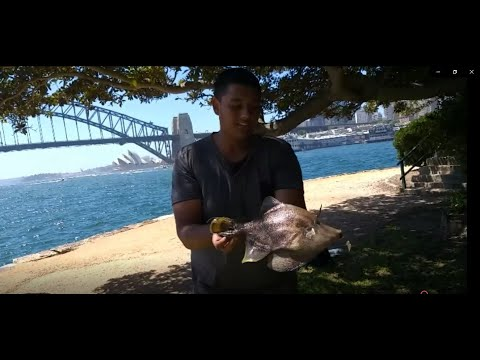 Sydney Harbour Fishing Mixed Bag