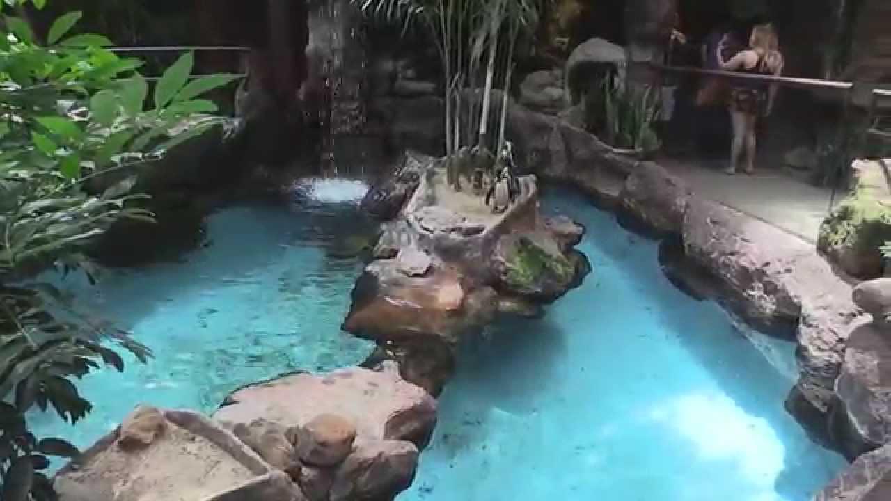 Dallas World Aquarium 06 29 2015 - YouTube