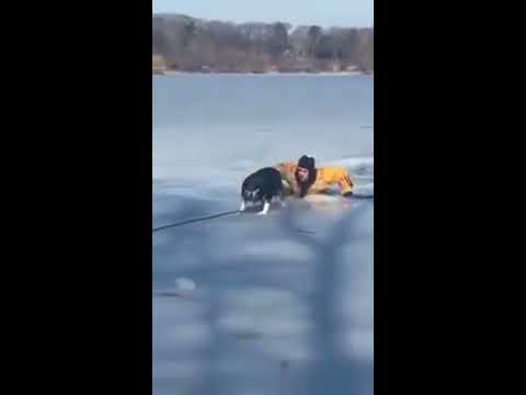 un bombero arriesgo su vida para salvar a una perra que habia caido en un lago congelado