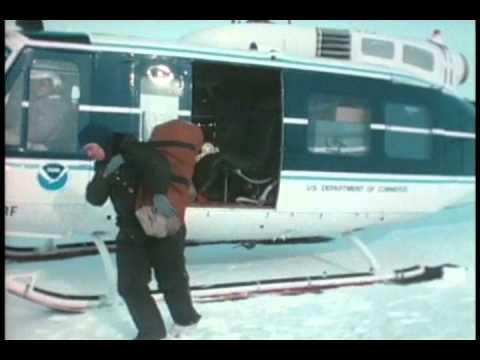 Polar Bears of the Pack Ice