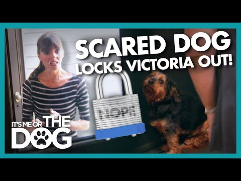 Extremely Anxious Dog 'Chubby' Refuses to Let Victoria in the House! |  It's Me or The Dog